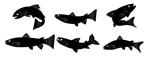 Рыба в Новосибирске