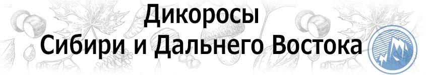 Купить дикоросы Сибири и Дальнего востока
